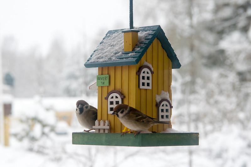 К вечеру понедельника 28.12. на юге страны ожидаются обильные снегопады