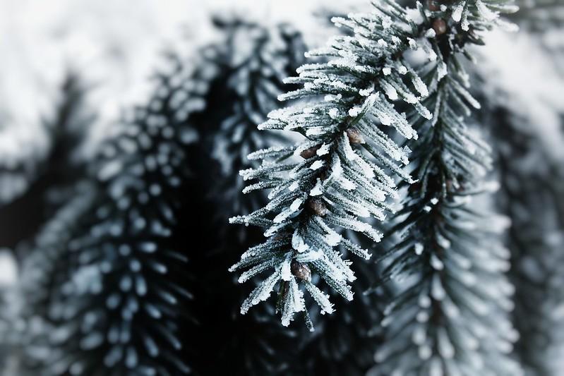 В ближайшие дни в Финляндии ожидается мороз, стужа и метели