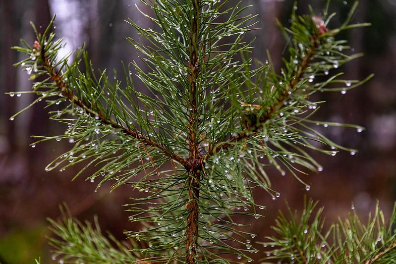 You are currently viewing Первое дыхание осени: в Финляндию идут дожди и заморозки