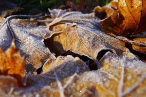 Read more about the article На севере страны температура опускалась до минус двадцати градусов